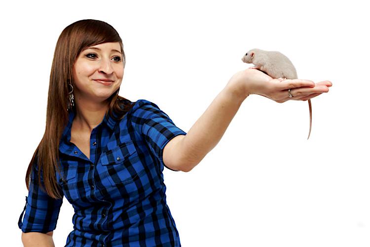 jak prawidłowo nosić i trzymać szczura