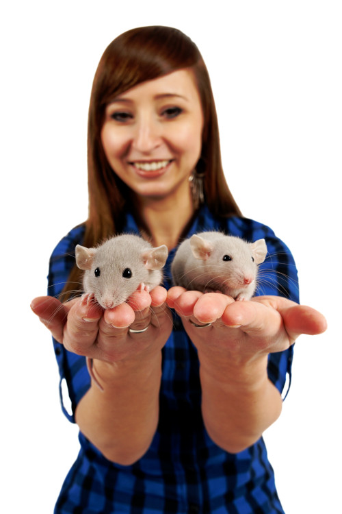 kontakt about rats