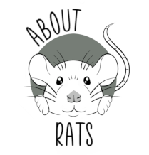about rats