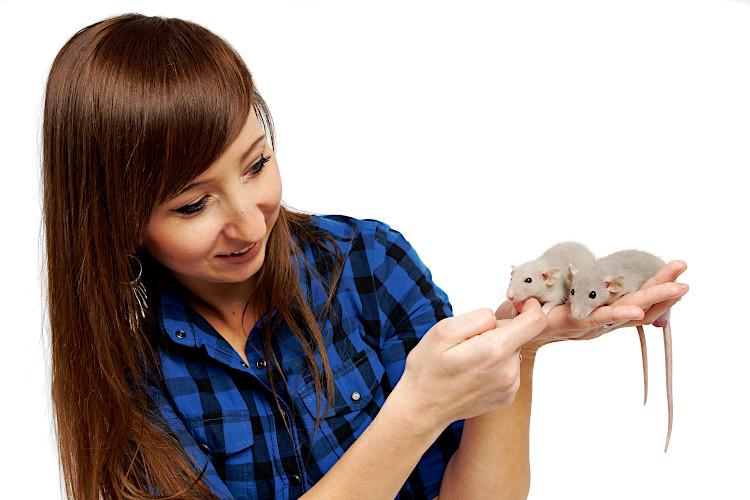 oswajanie szczurków